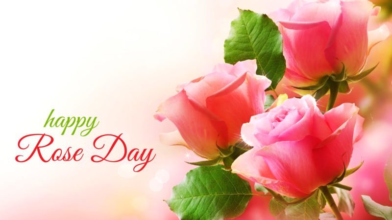 Download Happy Rose Day 2020 Specials Romantic Status Video
