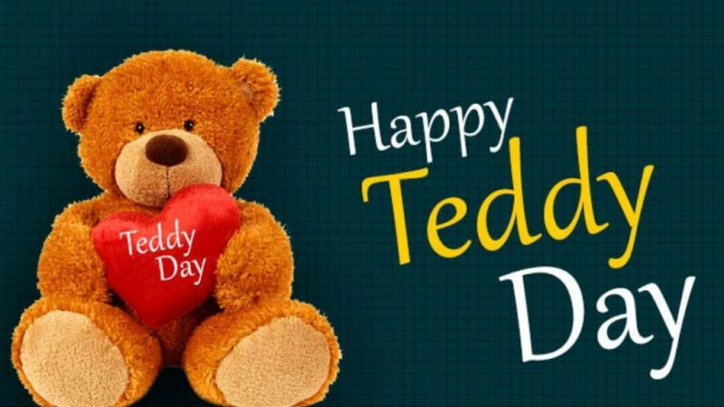 10 Feb Teddy Day Status Video Teddy Day Whatsapp Status