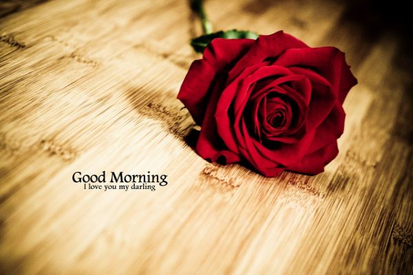 Download Good Morning Whatsapp Status Video With Song