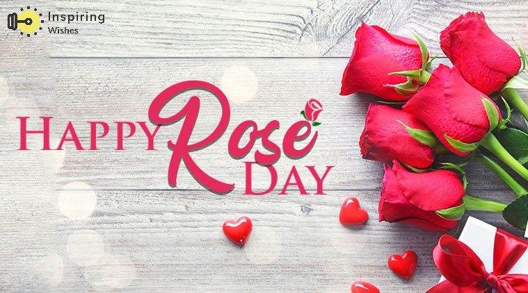 [ 2021 ] Happy Rose Day Whatsapp Status Video Download